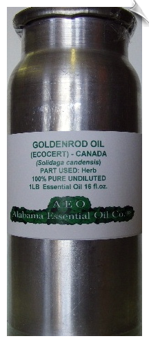 Goldenrod Essential Oil, Canada
