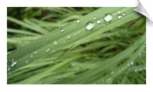 Citronella Essential Oil Water Soluble | Alabama Essential Oils