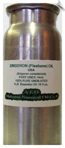 Erigeron (Fleabane) Oil USA | Alabama Essential Oil Company