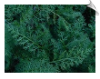 Yarrow Essential Oil, Green, USA