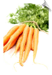 Helio Carrot CO2 Total in Jojoba (Carrot Root)